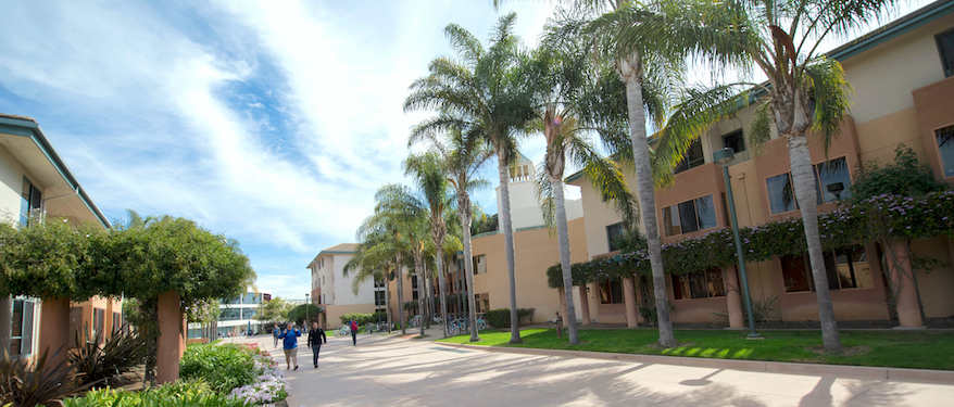 Students walking down the palm walk.